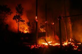Creative_Commons_Bario_Bush_Fire_Casualty_3